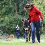 Frauen in Führungspositionen. Training mit Eseln tiergestützt