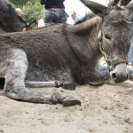 Nichtstun – was wir Menschen vom Esel lernen sollten