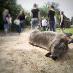 Esel Lotti beim Eselcoaching Teamevent vor Team-Besprechung