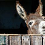 Wie Eselsohren im Coaching helfen
