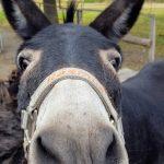 Eselcoaching – Was wird mich erwarten?