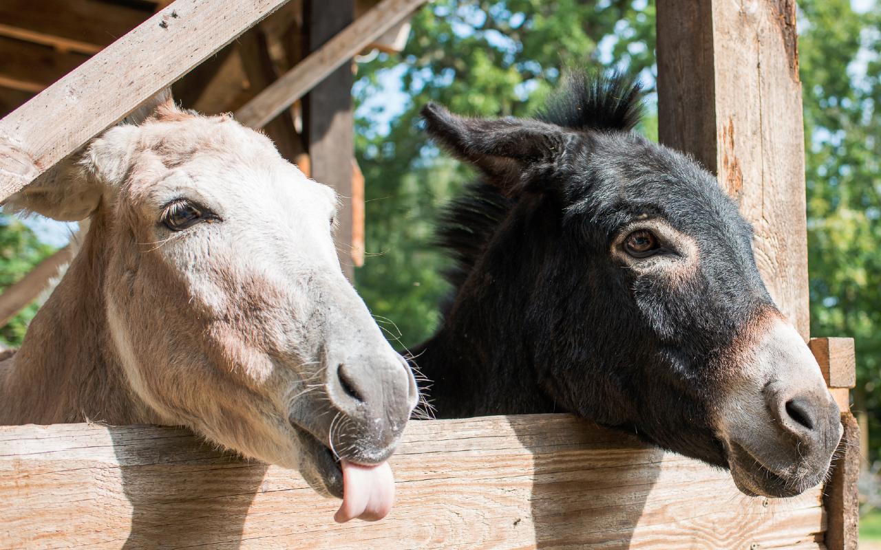 Eselcoachings und Workshops finden wegen der aktuellen Corona Situation nicht statt.